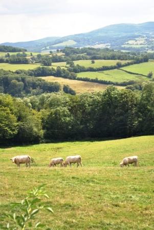 Landschaft in der Nièvre